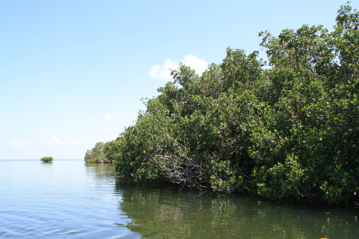 Mangroves that comprise uninhabited Keys.