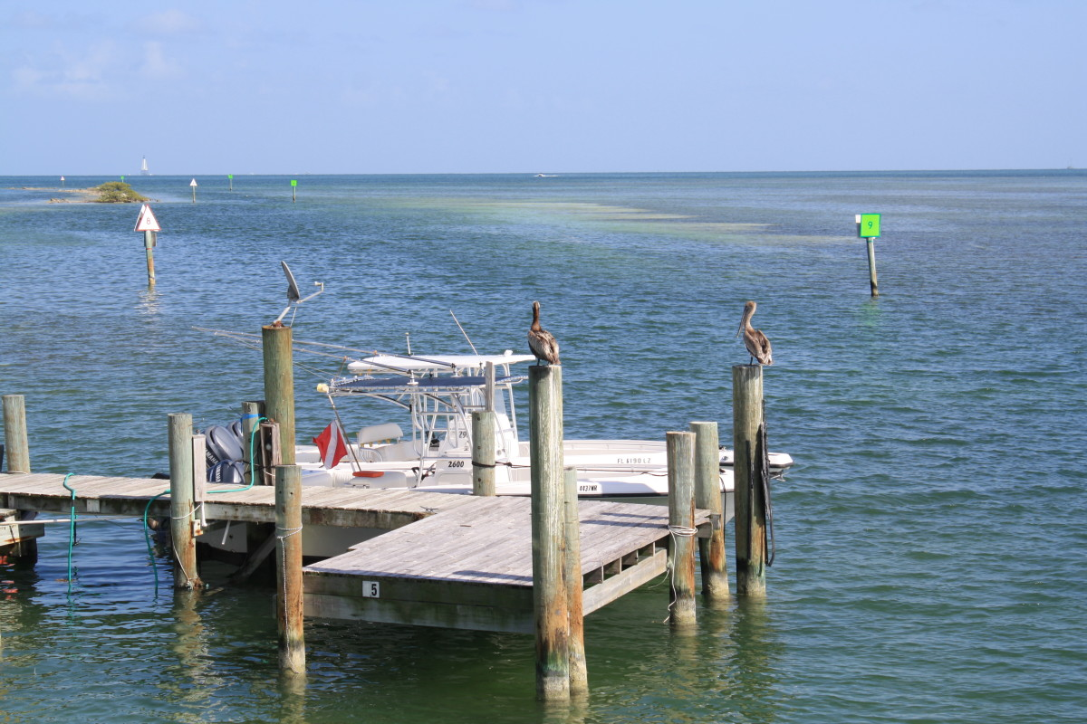 Florida Keys Beauty