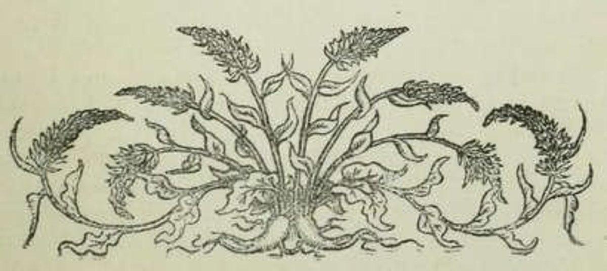 Vignette presenting rapunzel