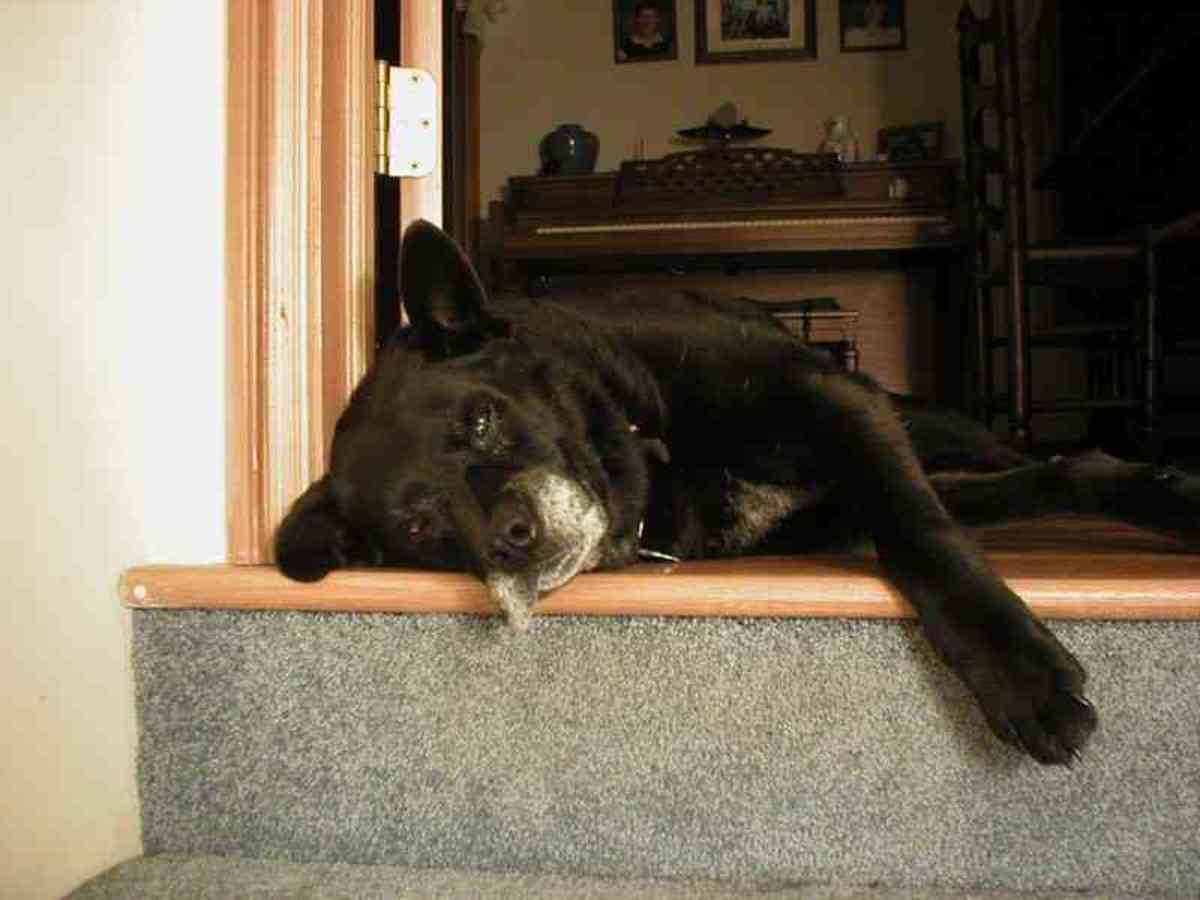 elderly-and-terminally-ill-pets-coping-with-the-inevitable