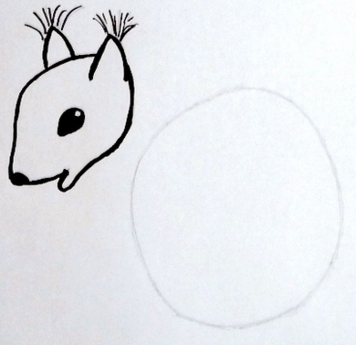Step 4: This is squirrels head and snout.