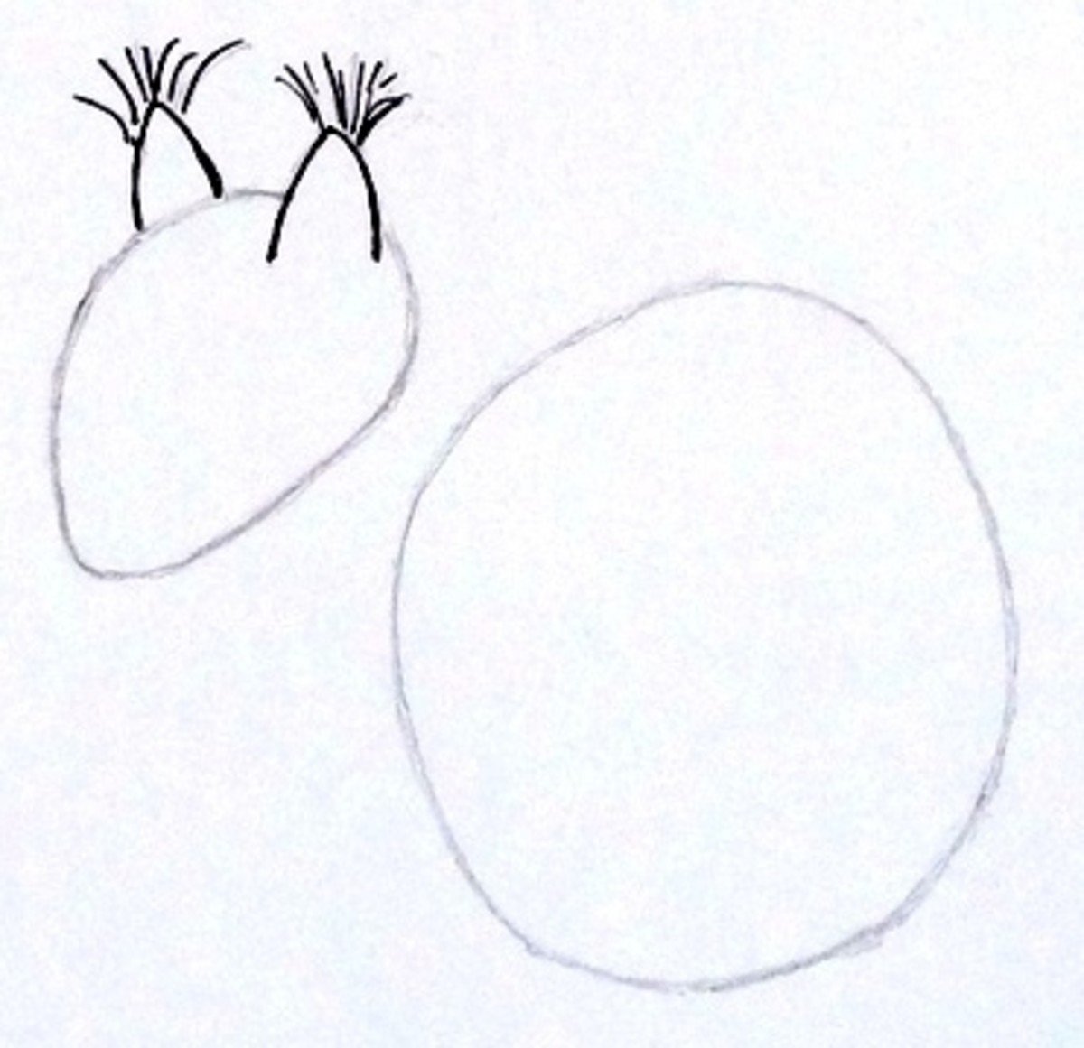 how to draw a cute squirrel step by step