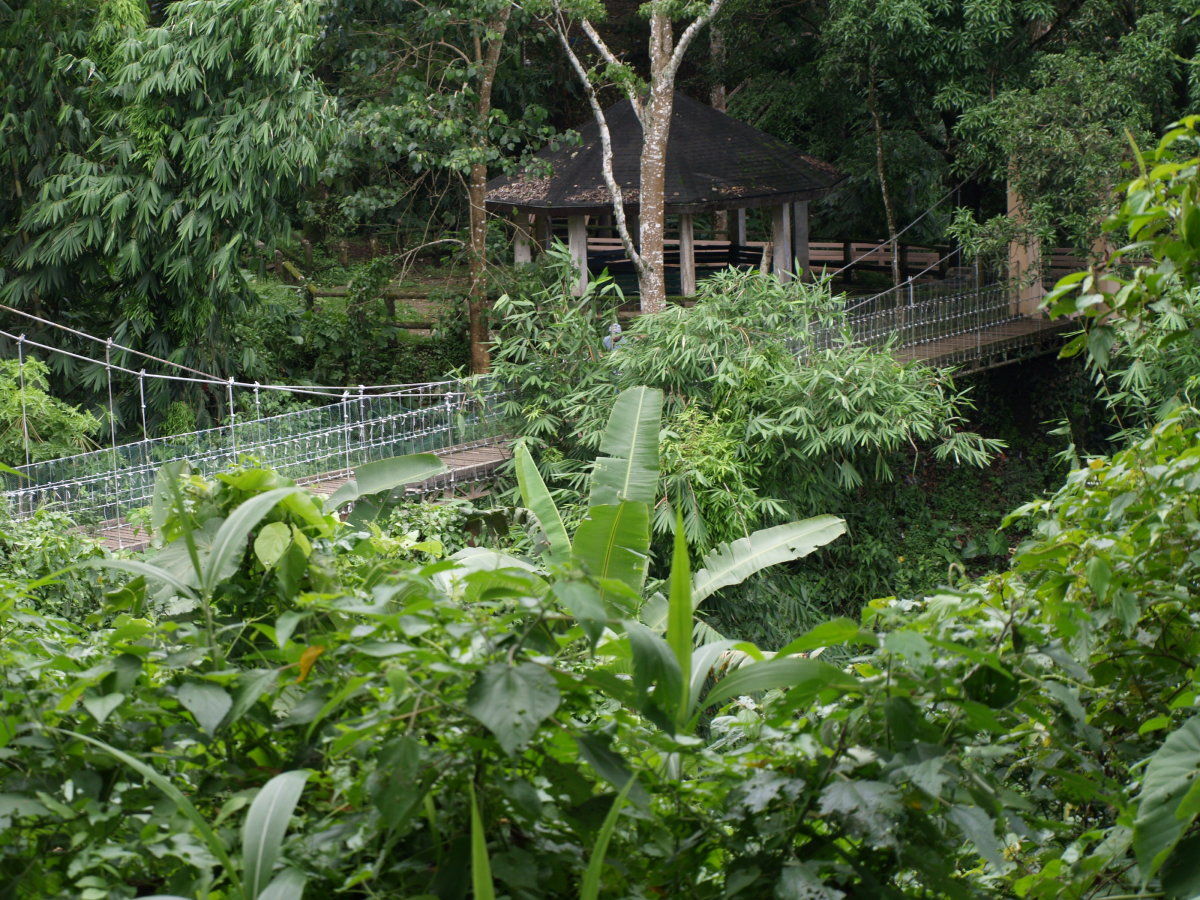 The Hanging Bridge at Eco Adventure Trail