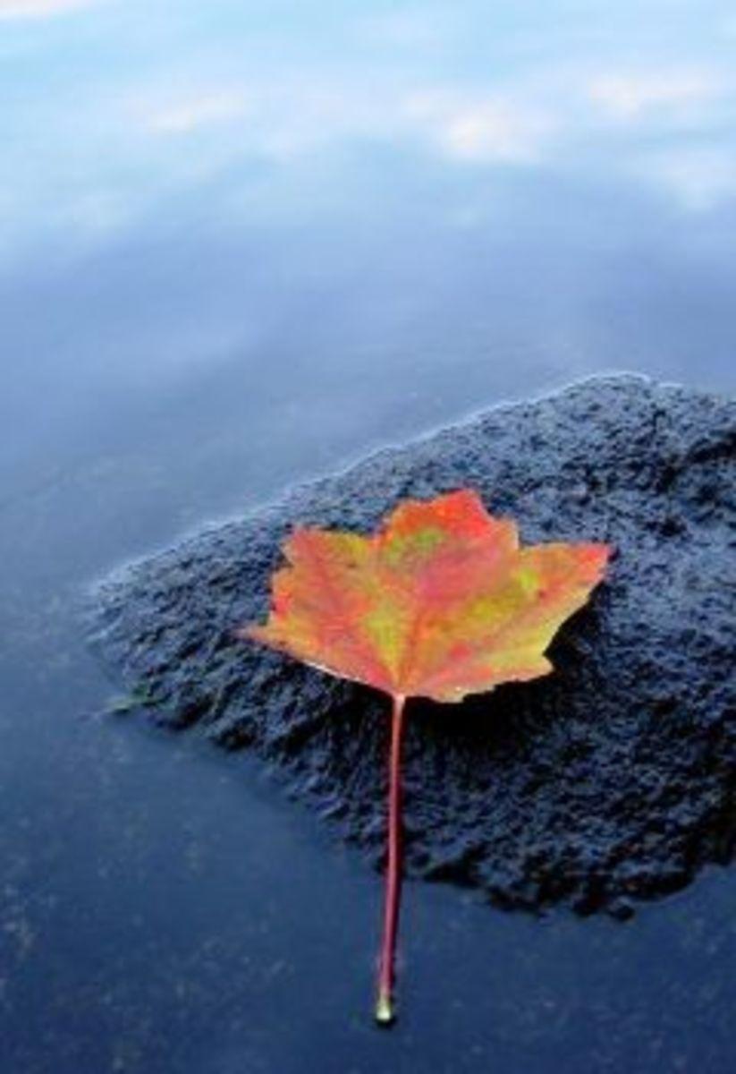 Quiet Zen Leaf