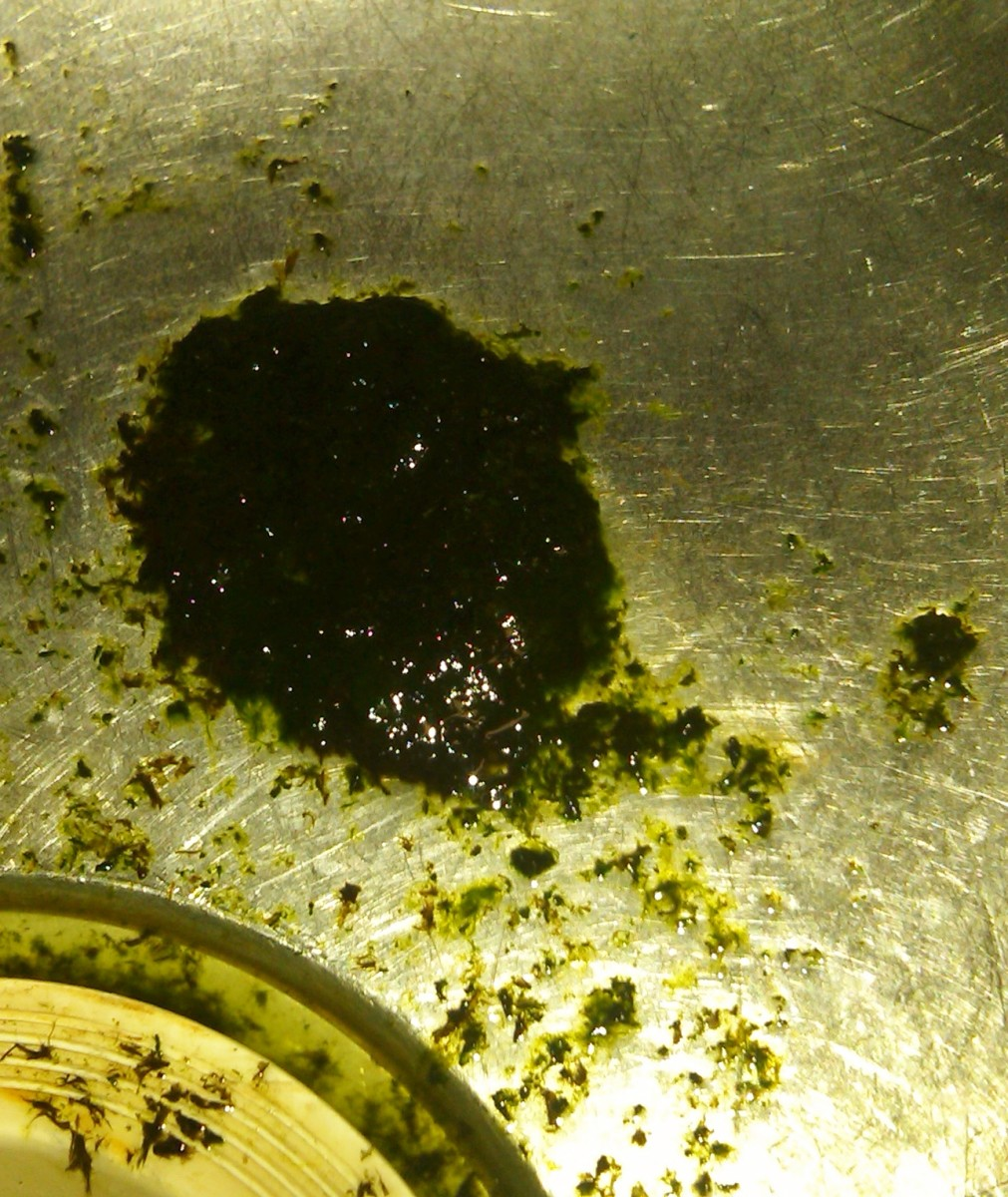 Here is the amount of algae I was able to scrape off of the screen from both sides. 9/9/12)