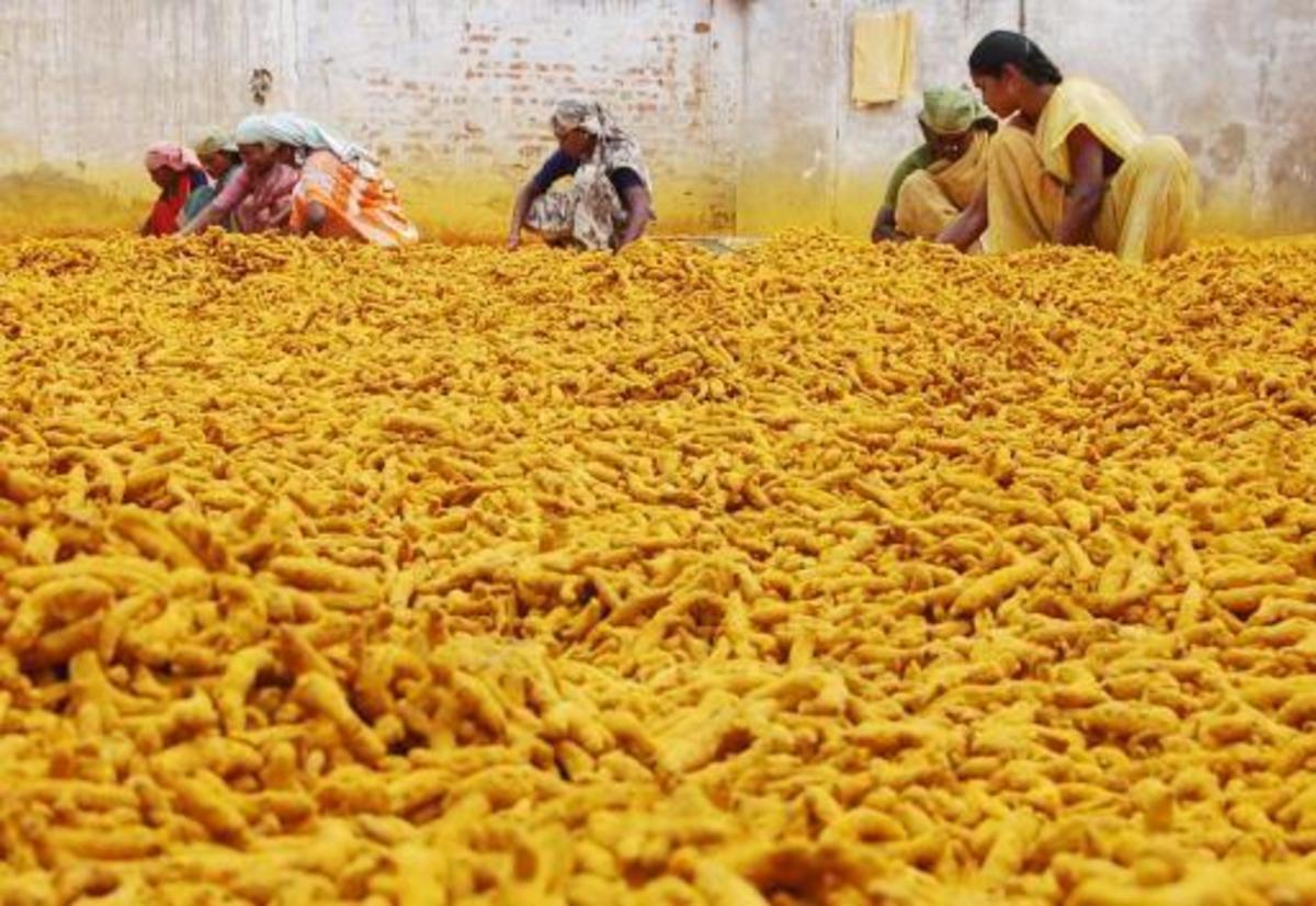 rural women processing turmeric in Indian village