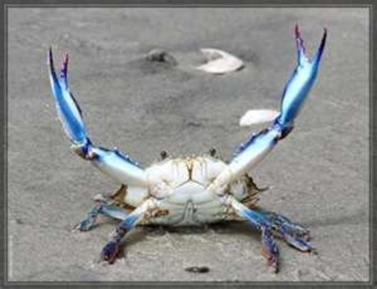 Image credit: http://www.deadliestcatchfan.com/