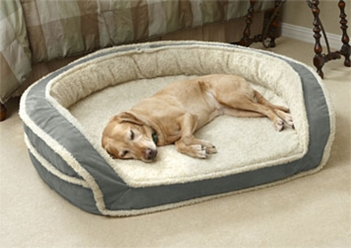 Bolster Bed with Memory Foam