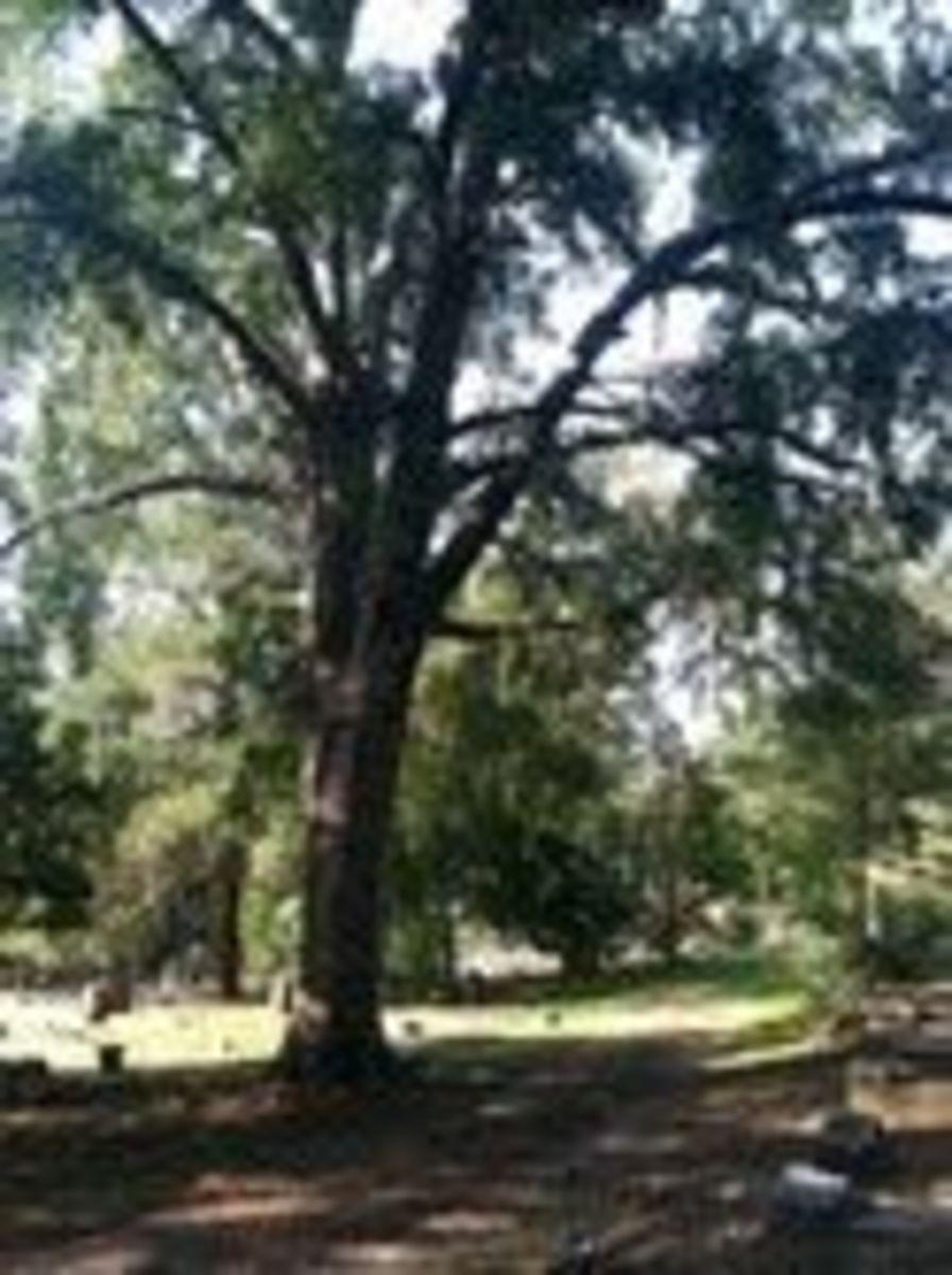 American Cemetery, Natchitoches, LA
