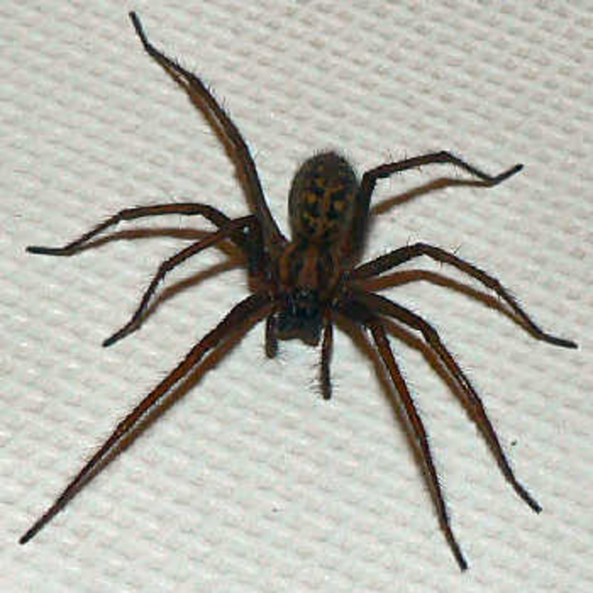 4 Reasons Not to Kill That Spider