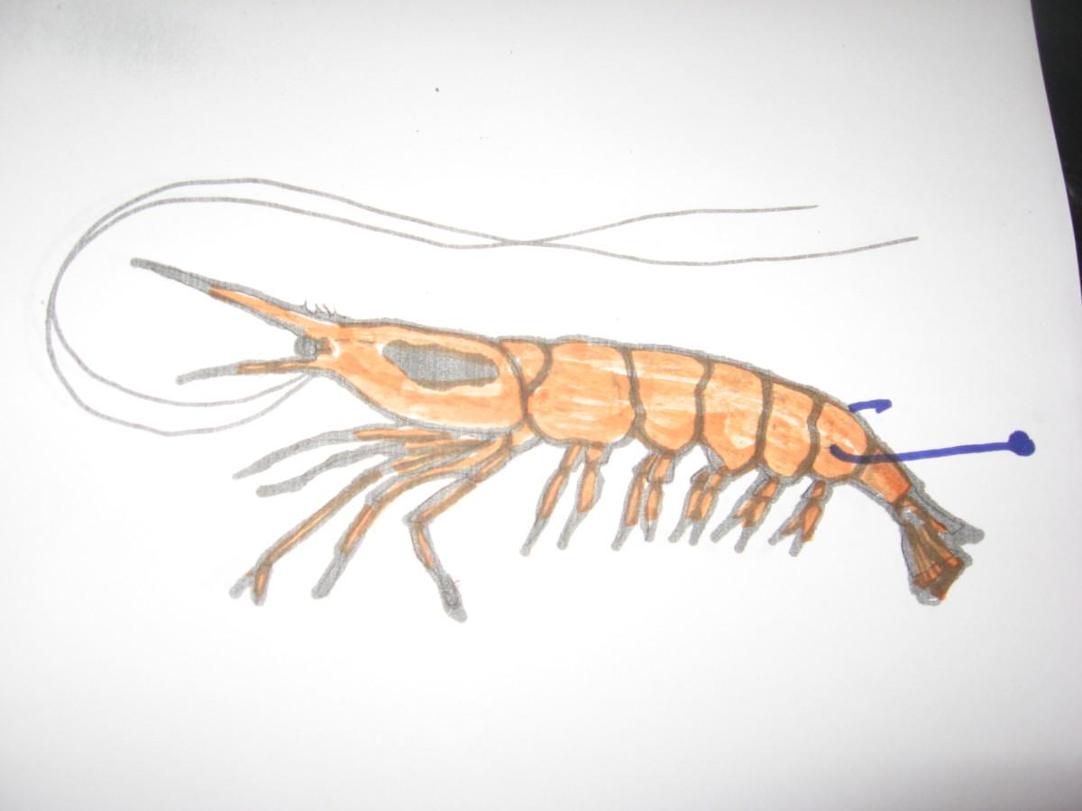 hook up live shrimp Find great deals on ebay for live shrimp hook shop with confidence.