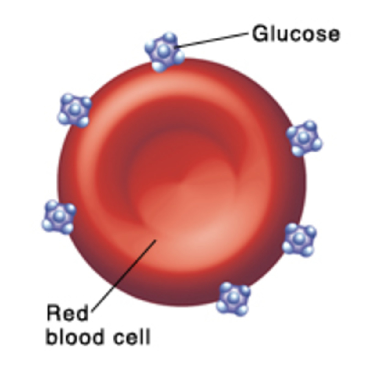 Non-diabetics red blood cells have some glucose molecules attached to it.