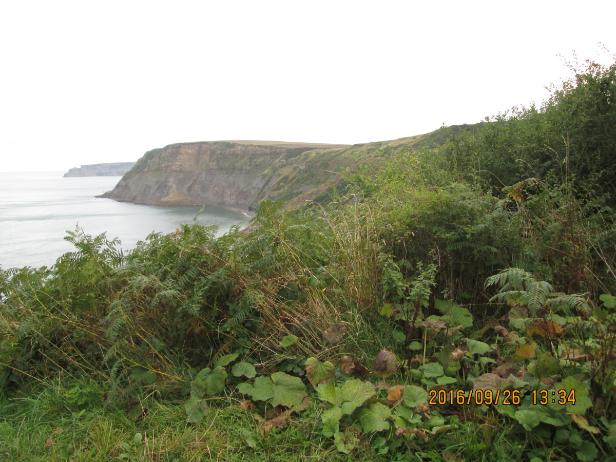 The view east from the footpath down to the shore - a cliff fall rendered the lower footpath impassible. However...