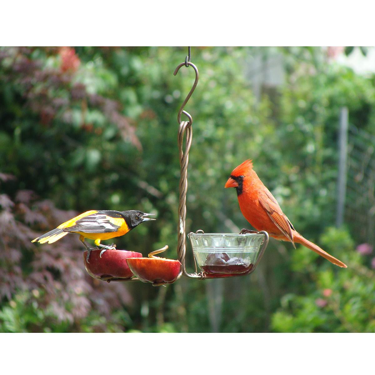Backyard Gifts great gifts for backyard bird watchers   hubpages