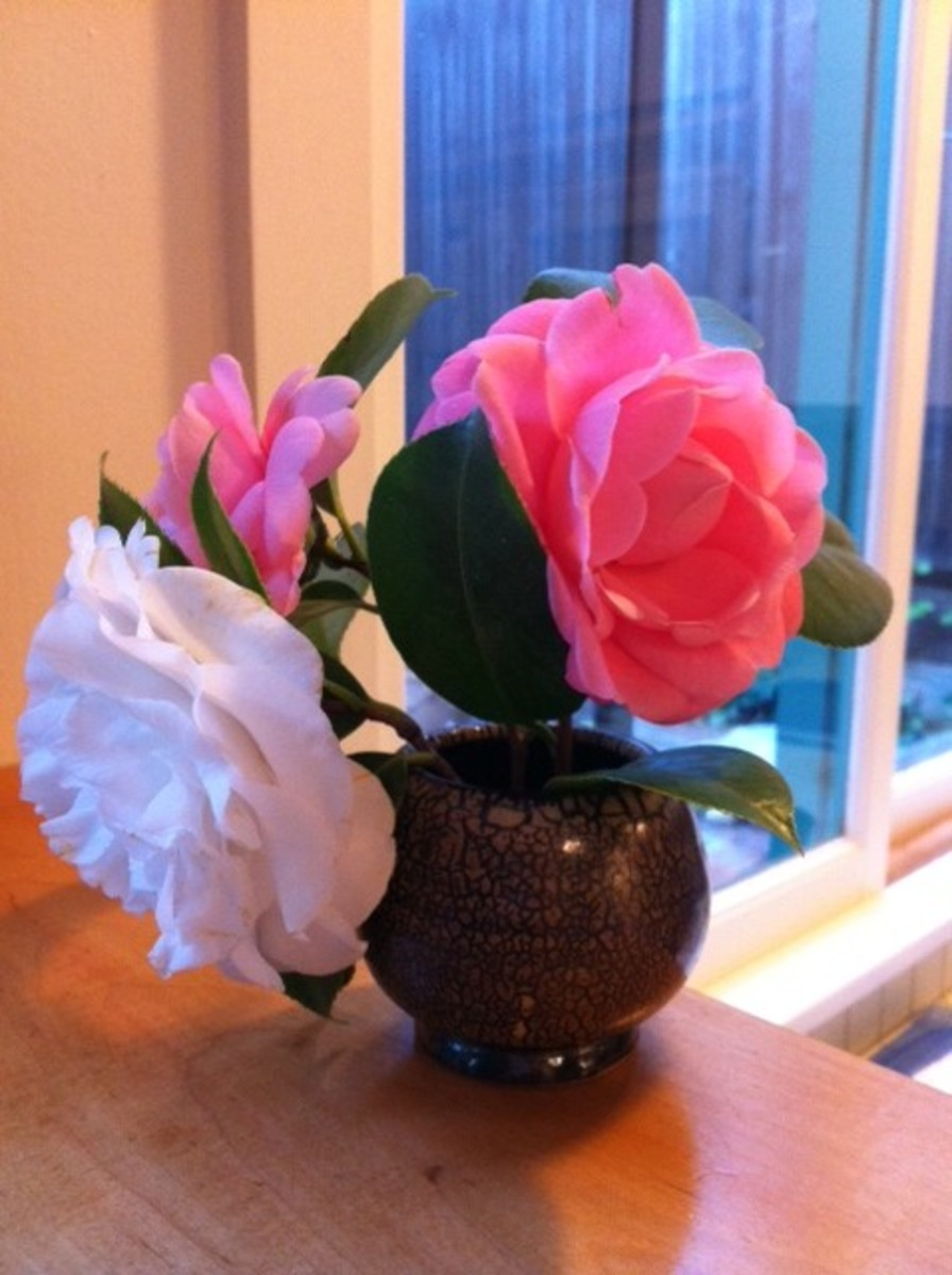 Camellias in a hand  made ceramic bowl