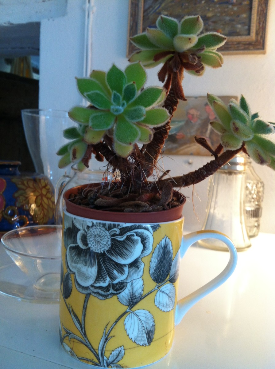 A rose patterned mug with a Christmassy leafed plant in it.