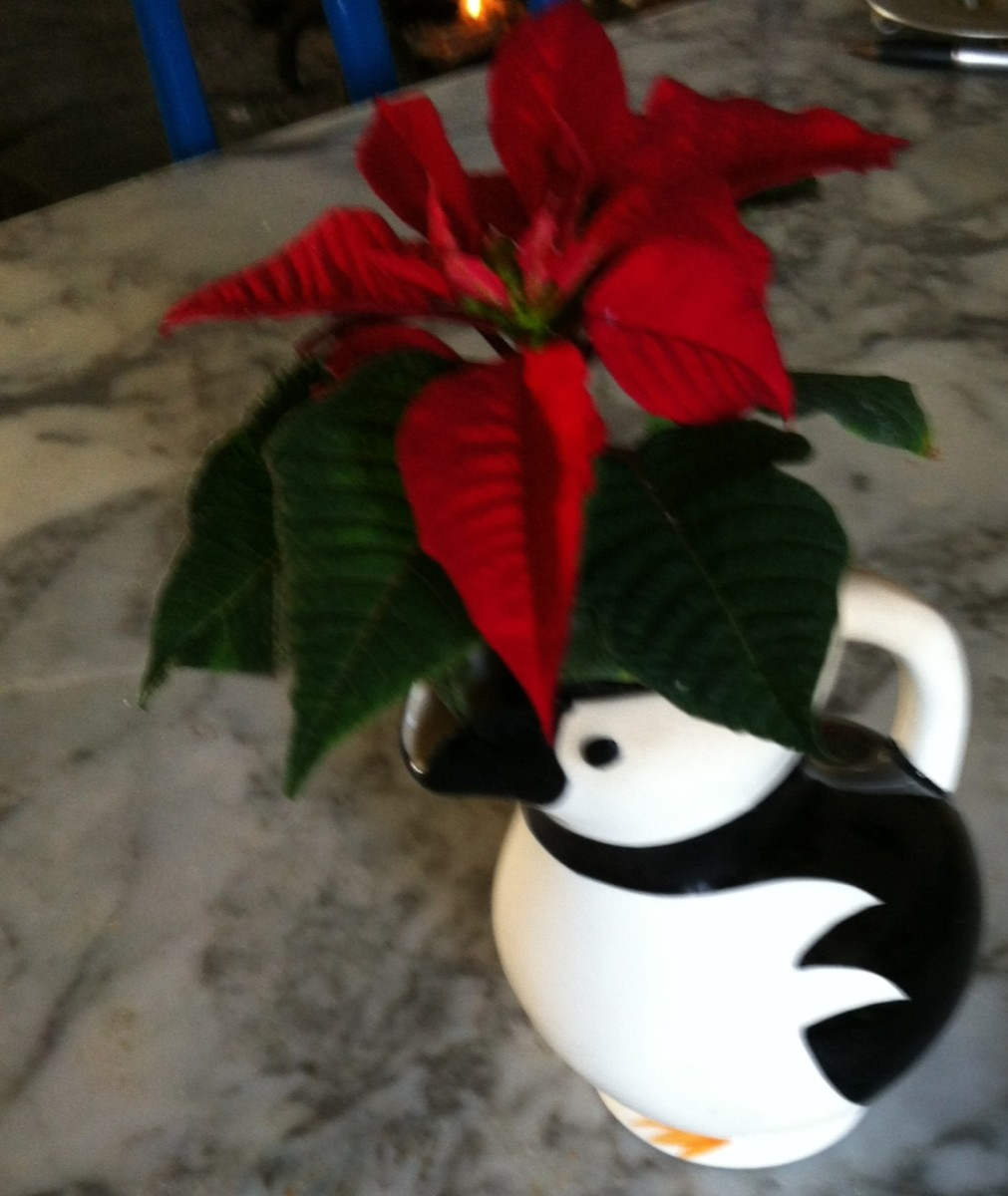 A penguin jug with a very small pot of these red Christmas flowers in it.