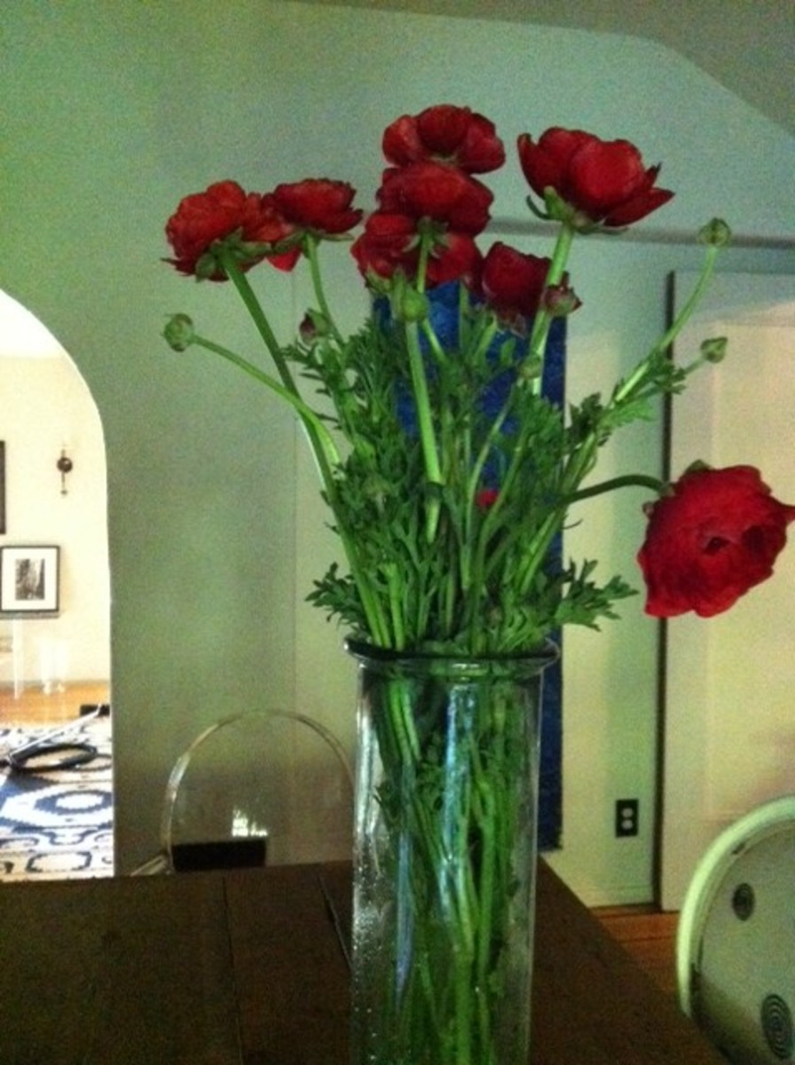 Poppies in a tall glass vase