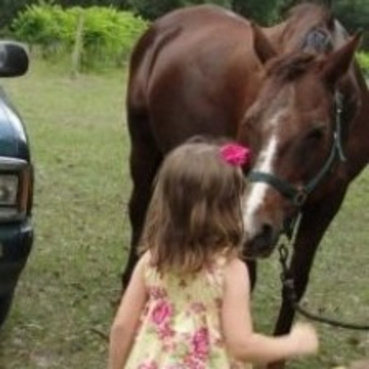 horse-lesson-for-kindergarten