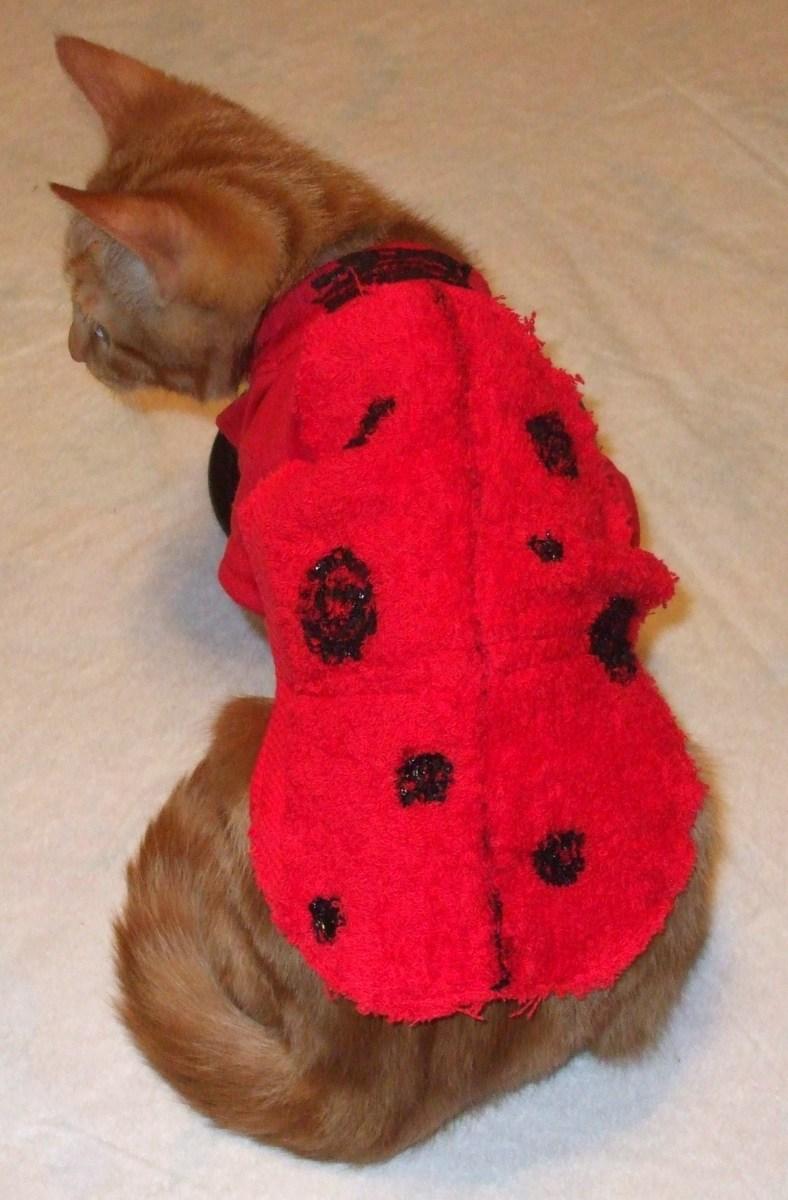 Kitten ladybug costume.