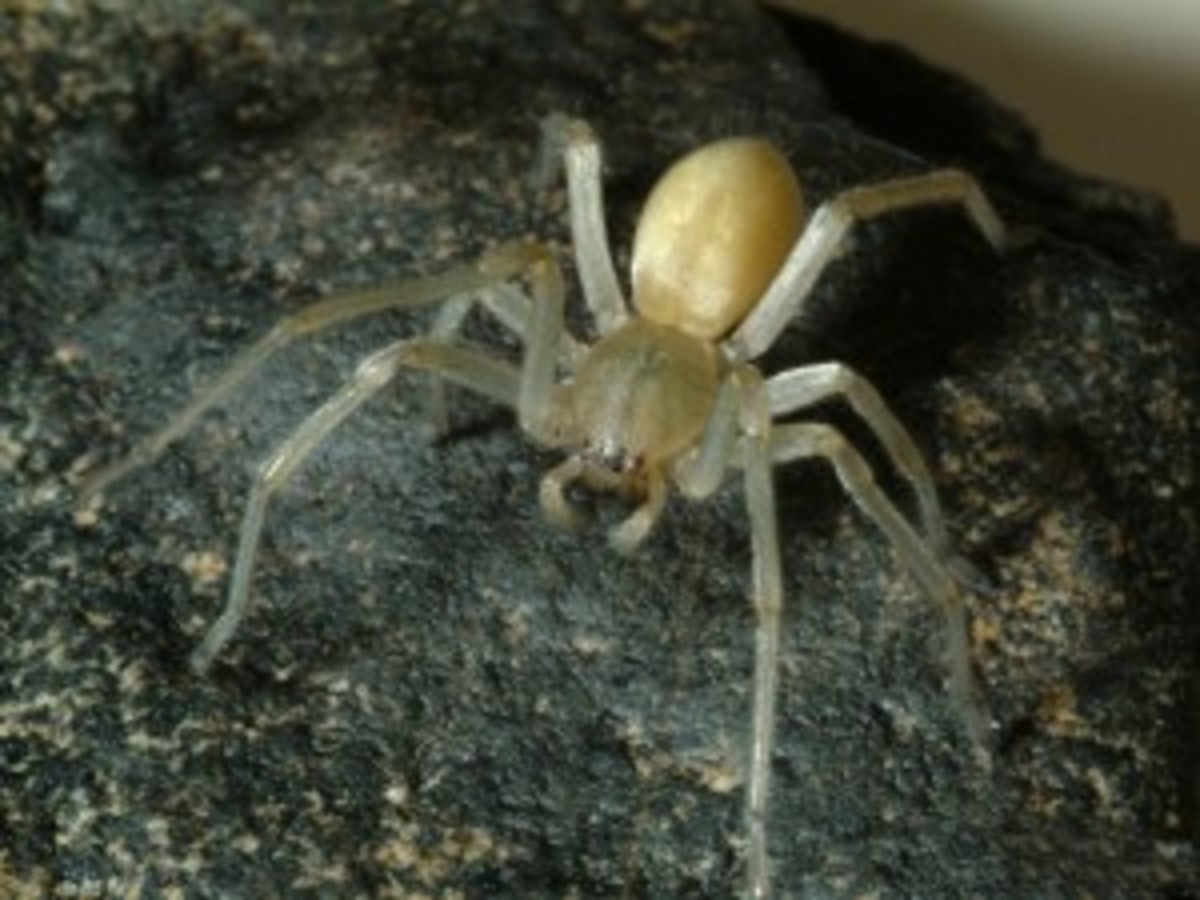 Organic, Natural Ways to Kill or Manage Spiders