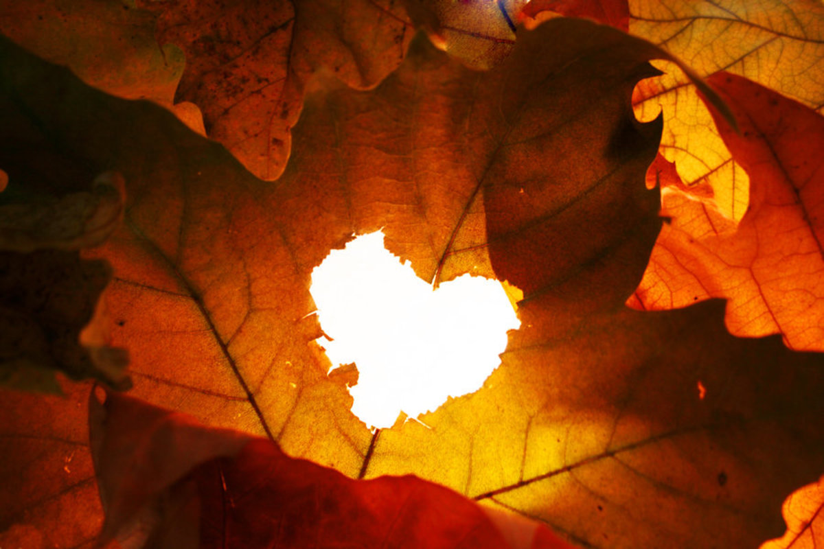 Art and Poetry: Falling For You