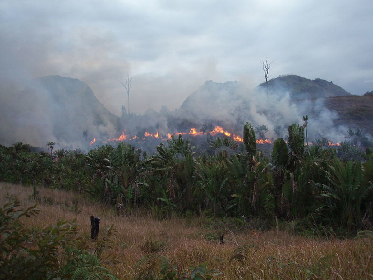 This photos the illegal destruction of forest in Madagascar, it also highlights the shifting slash and burn method used by the farmers.