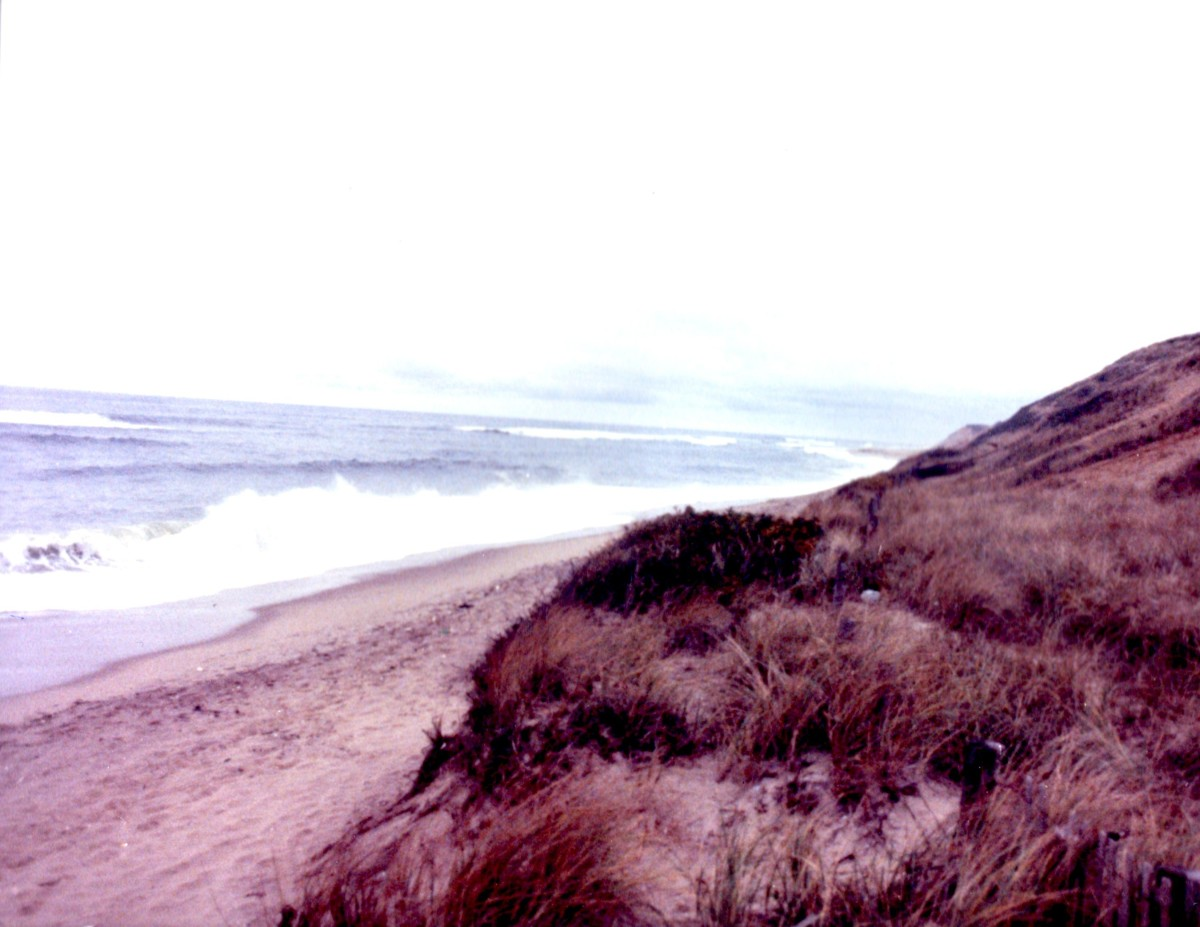 The Dunes of Cape Cod