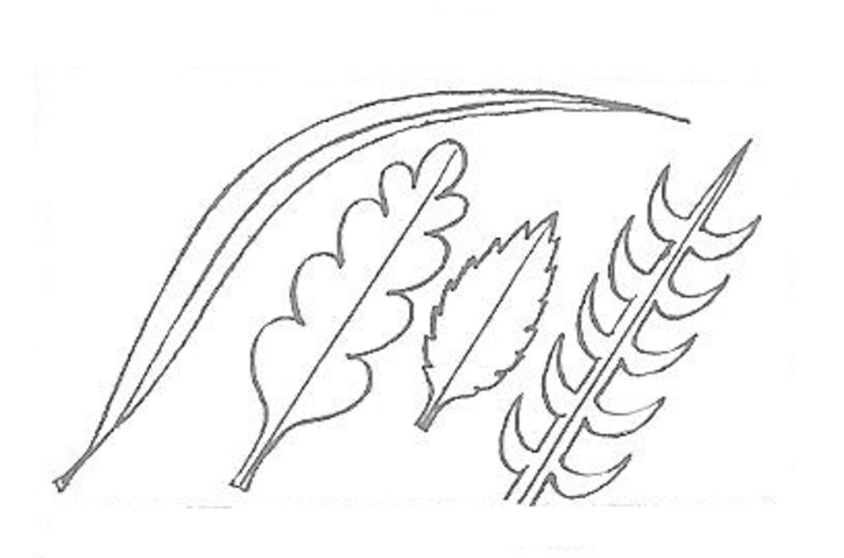 Some Leaf Shape Ideas