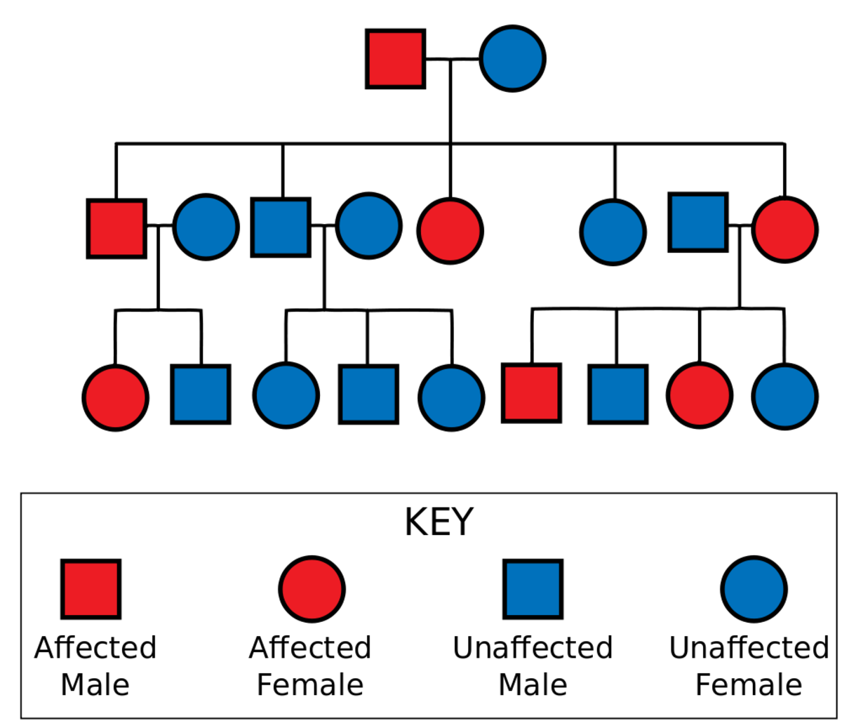 Autosomal Dominant Pedigree Chart. In Autosomal Dominance the chance of receiving and expressing a particular gene is 50% regardless of the sex of parent or child.