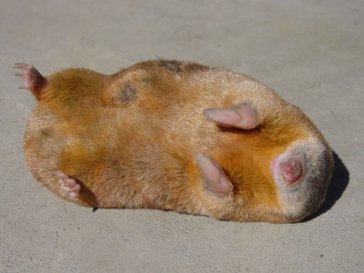 """Draw me like one of your French moles."""
