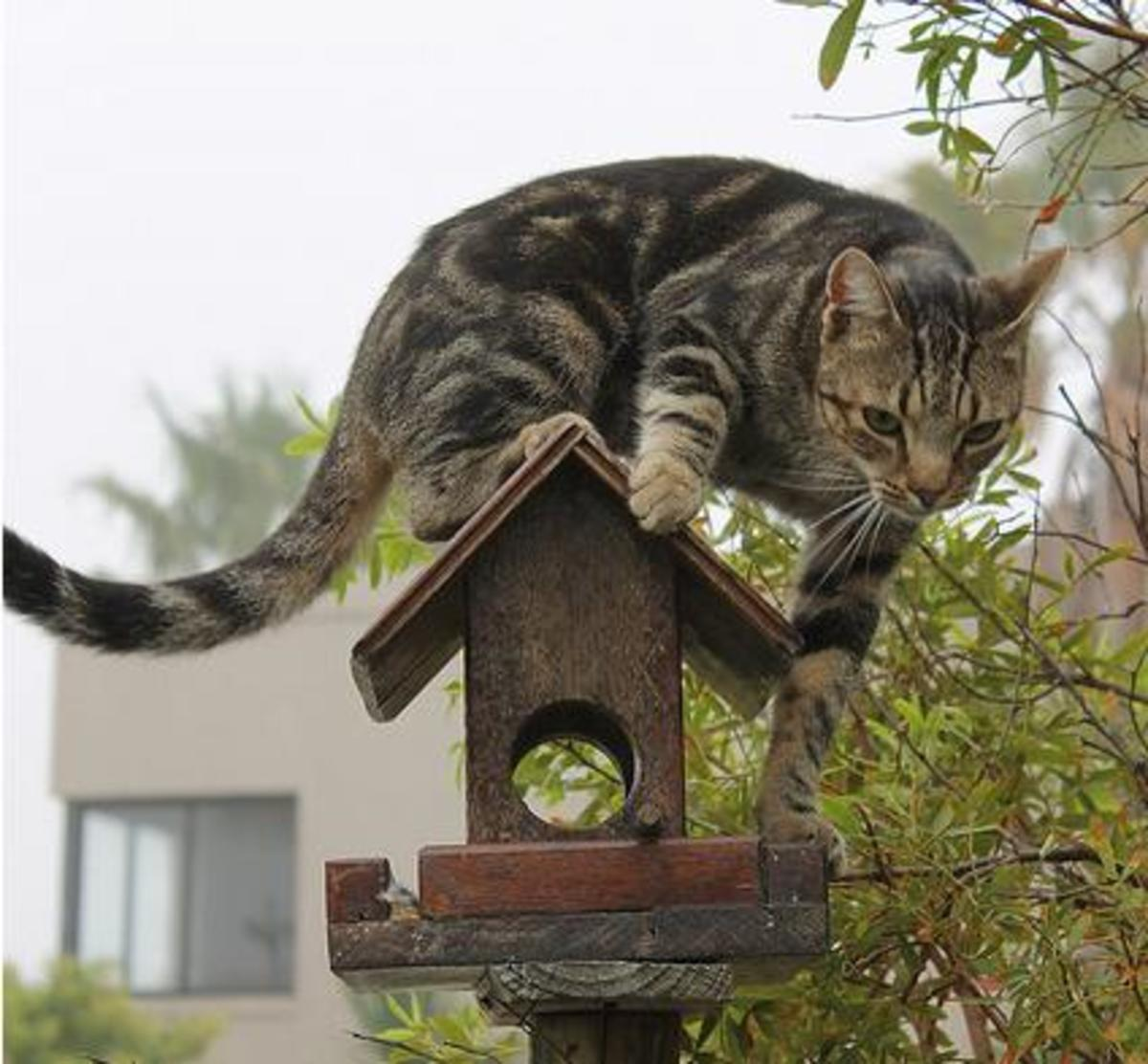 Owned pet cats often raid people's bird feeders