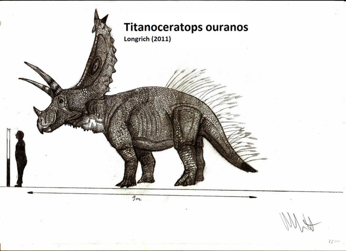 Titanocerotops