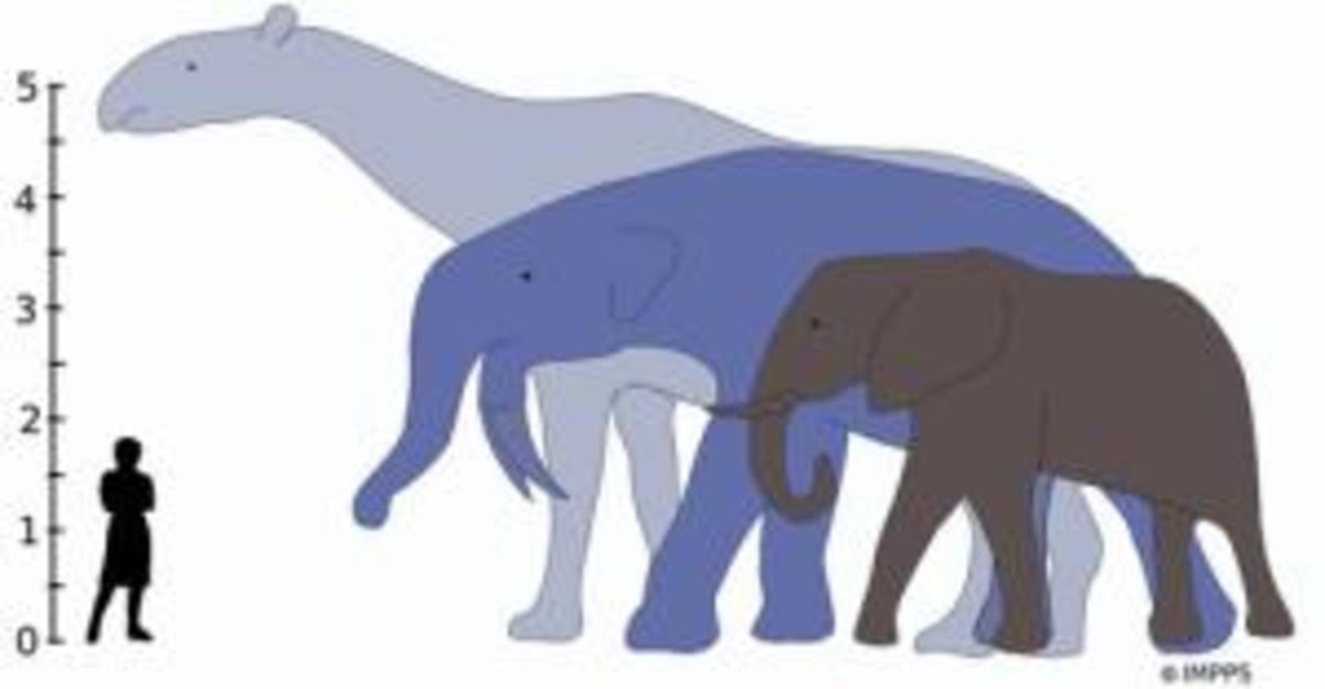 Indricotherium in back, Deinotherium in middle, and African Elephant in foreground