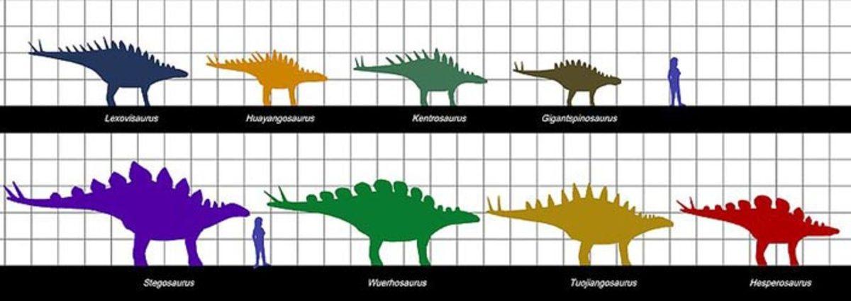 Stegosaurs