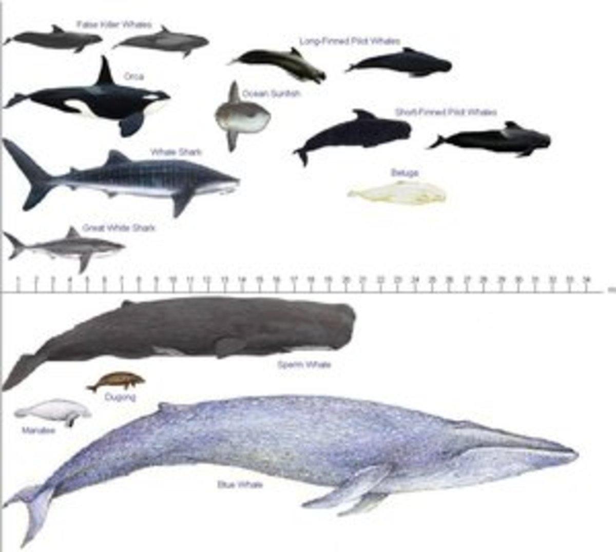 Large ocean animals