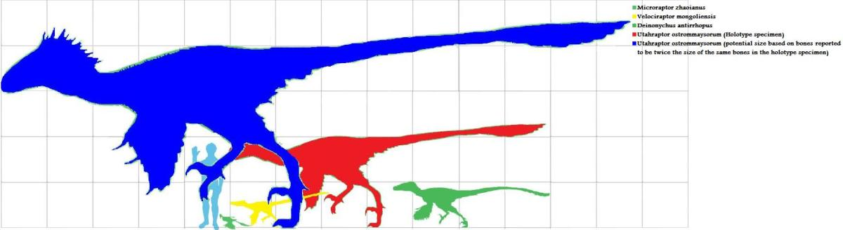 Maximum and average Utahraptor estimations