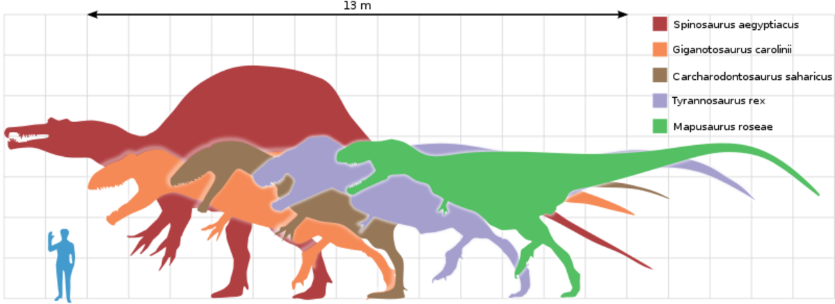 Largests theropods