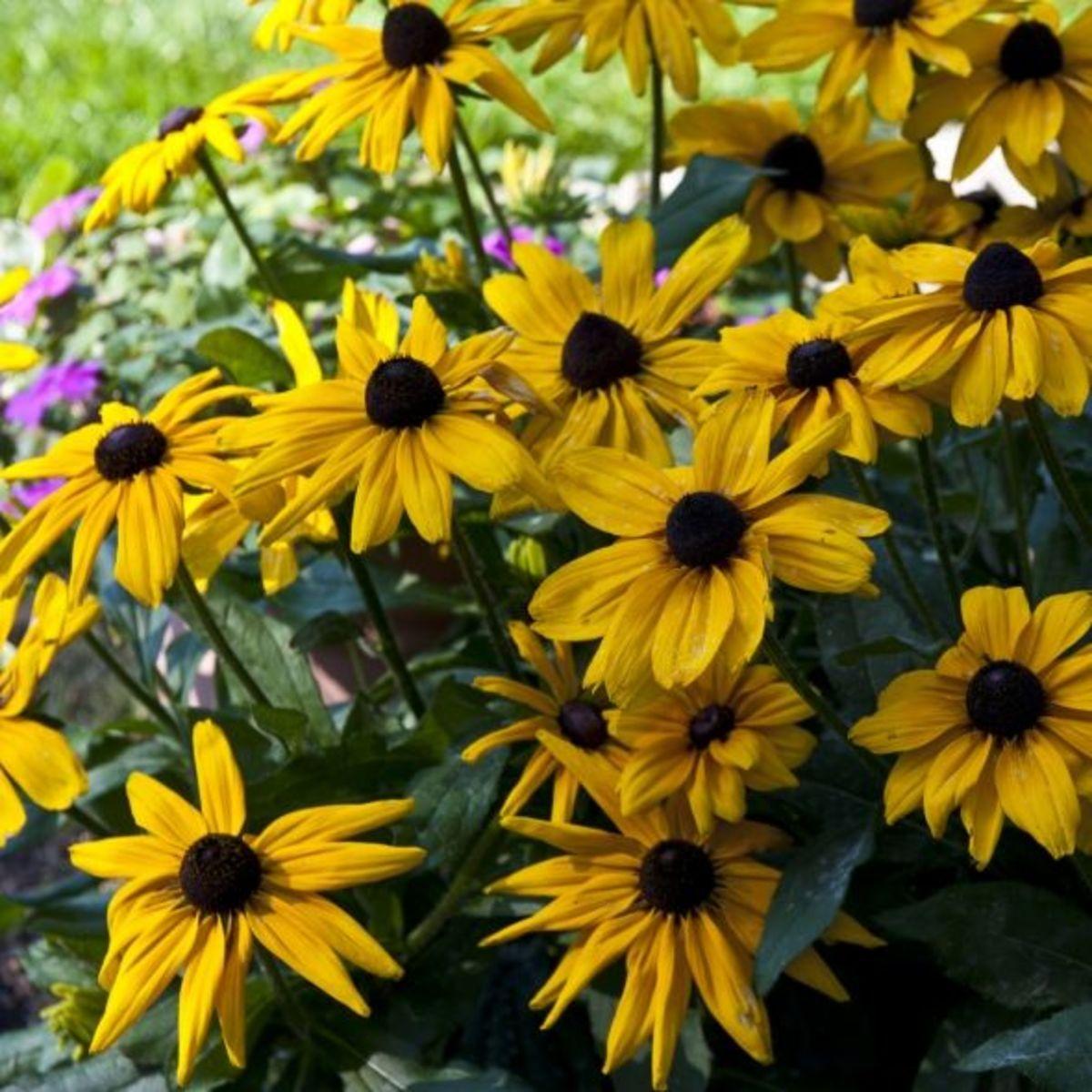 Flowers in the Fairy Garden