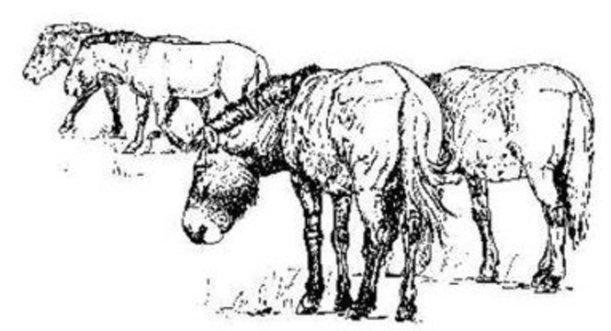 A Drawing of Pleistocene era wild horses, a favorite source of food
