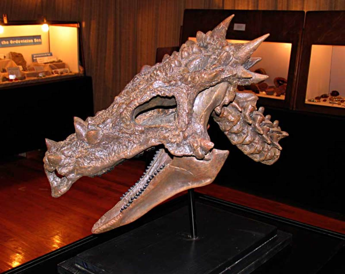 Dracorex hogwartsia may have been an adolescent pachycephalosaurus.
