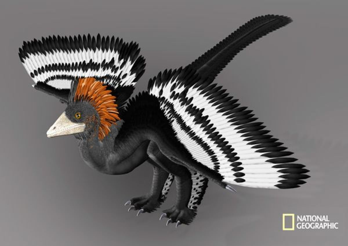 Anchiornis is the first dinosaur to show its color over its entire body.