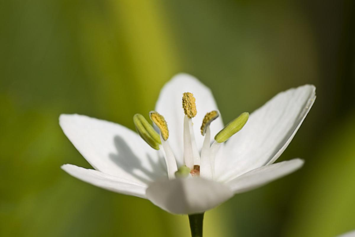 health-benefits-of-garlic-plus-recipes