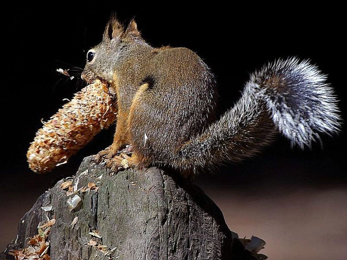 Squirrels gather food and store it for the winter