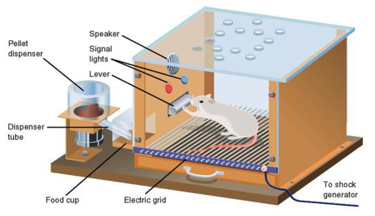 A visual representation of a Skinner box.