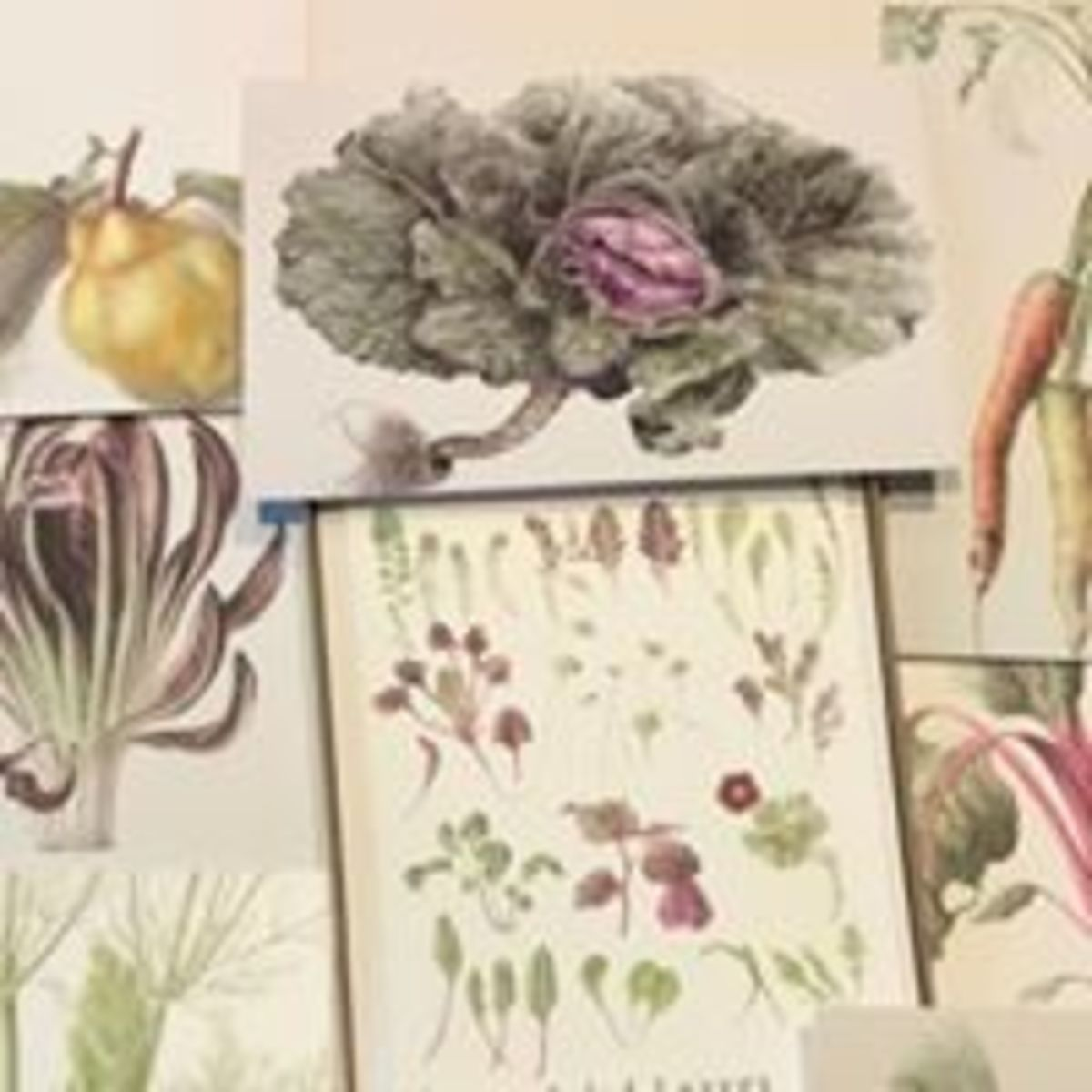 Botanical greetings cards and prints by Louise Young.