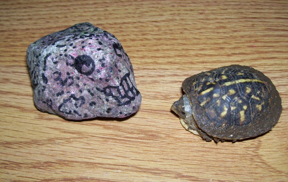 Pet rocks get along well with all other pets.