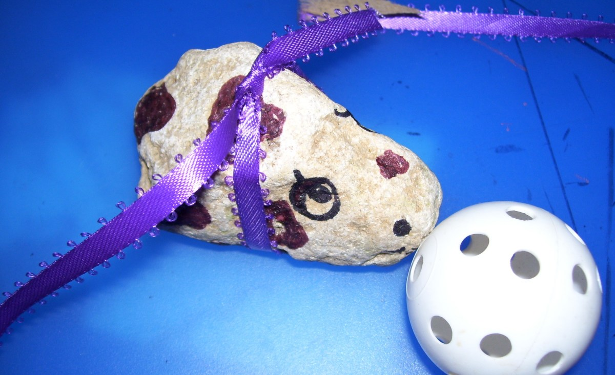 Swimming is fun. Use shallow water or tie a leash around your pet rock.