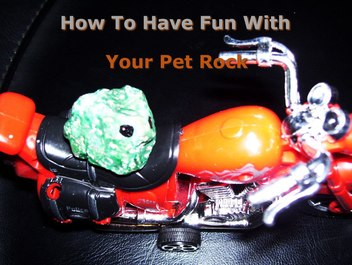 How to Have a Fun Time with Your Pet Rock