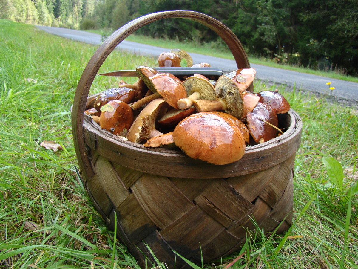 A basket full of freshly foraged mushrooms.
